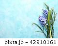 お花 フラワー 咲く花の写真 42910161