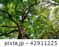 新緑イメージ 42911225