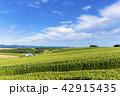 風景 晴れ 自然の写真 42915435