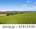 風景 晴れ 自然の写真 42915436
