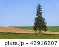 風景 晴れ 丘の写真 42916207
