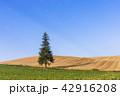 風景 晴れ 丘の写真 42916208