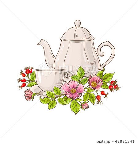 wild rose tea illustration 42921541