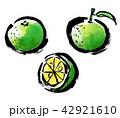 筆描き 柑橘類 42921610
