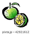 筆描き 柑橘類 42921612