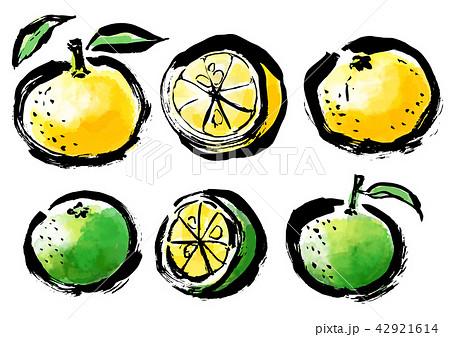 筆描き 柑橘類 42921614