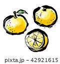 筆描き 柑橘類 42921615