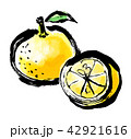 筆描き 柑橘類 42921616