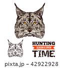 オオヤマネコ 動物 狩るのイラスト 42922928