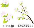 桜 花 ソメイヨシノのイラスト 42923511