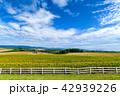 風景 花畑 雲の写真 42939226