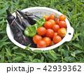 夏野菜 42939362