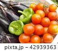 夏野菜 42939363