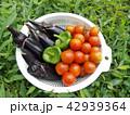 夏野菜 42939364
