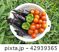 夏野菜 42939365