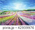 富良野 お花畑 サルビア ラベンダー 富田農園 42939976