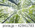 木立 樹木 新緑の写真 42941783