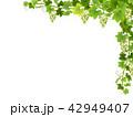 ぶどう ブドウ 葡萄のイラスト 42949407