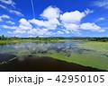 大沢内ため池 池 夏の写真 42950105