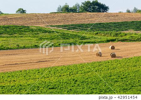 上富良野の麦畑 麦ロール 42951454