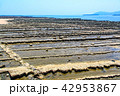 鬼の洗濯板 日南海岸 青島の写真 42953867
