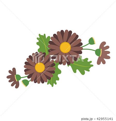 nature flower brown daisyのイラスト素材 42955141 pixta
