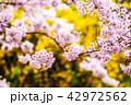 花 さくら 桜の写真 42972562