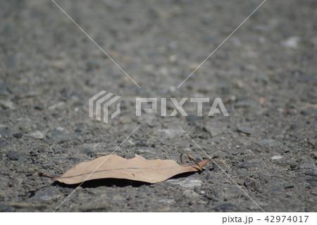 アスファルトの上の枯れ葉1枚 42974017