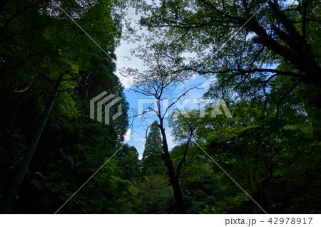 森の中 青空 暗い風景 In the forest Blue sky Dark landscape 42978917
