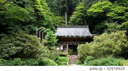 日本 京都 志明院 山門 Japan Kyoto Shimyoin 42978920