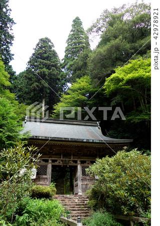 日本 京都 志明院 山門 Japan Kyoto Shimyoin 42978921