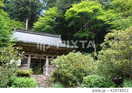 日本 京都 志明院 山門 Japan Kyoto Shimyoin 42978922