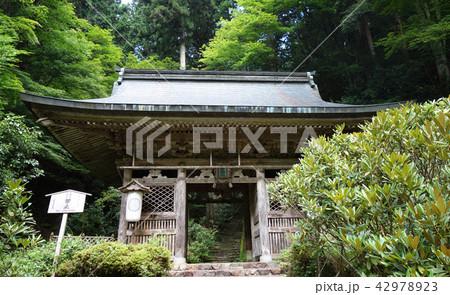 日本 京都 志明院 山門 Japan Kyoto Shimyoin 42978923