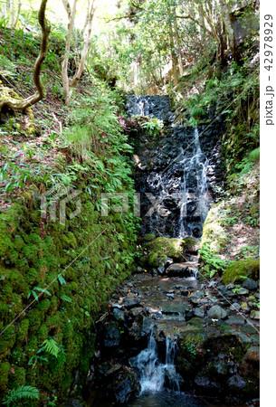 日本 京都 緑の中の小さな滝 Japan Kyoto A small waterfall 42978929