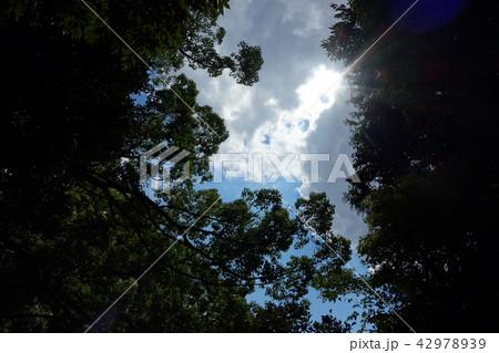 森の中からの風景 自然 空 Landscape from the forest Nature sky 42978939