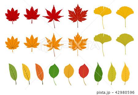 秋の紅葉イラストsetのイラスト素材 42980596 Pixta