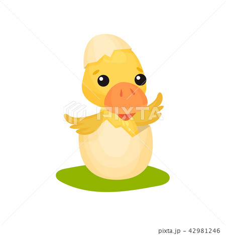Cute little yellow duckling character hatching from egg vector Illustration on a white background 42981246
