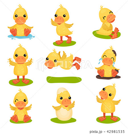 Cute little yellow duckling character set, chick duck in different poses and situations vector 42981535