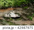 川辺のミヤマカワトンボ 42987975