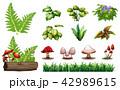 組み合わせ 植物 草木のイラスト 42989615