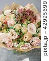 あじさい アジサイ 紫陽花の写真 42995699