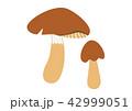 松茸 42999051