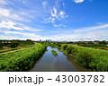 夏の日の芝川 43003782