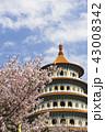 天元宮 桜 花の写真 43008342