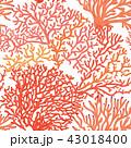 海 サンゴ 珊瑚のイラスト 43018400
