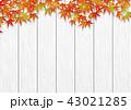 白木 紅葉 秋のイラスト 43021285