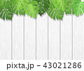 白木 葉 背景素材のイラスト 43021286