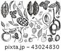 くだもの フルーツ 実のイラスト 43024830