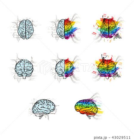 set of technical and creative brainsのイラスト素材 43029511 pixta