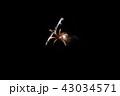 花火 43034571